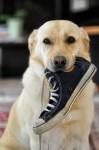 靴通販会社を比較 手軽に安く買えるところをまとめてみた