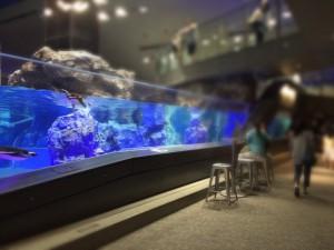 すみだ水族館 ペンギンカフェ椅子