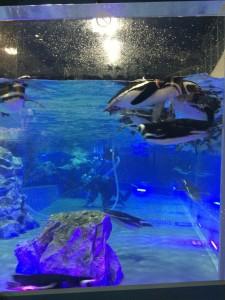 すみだ水族館 ペンギン2