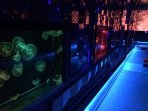 すみだ水族館 クラゲ