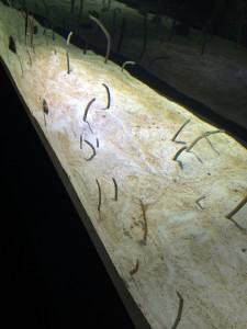 すみだ水族館 チンアナゴ